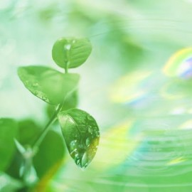 Усны тухай 30 сонирхолтой баримт